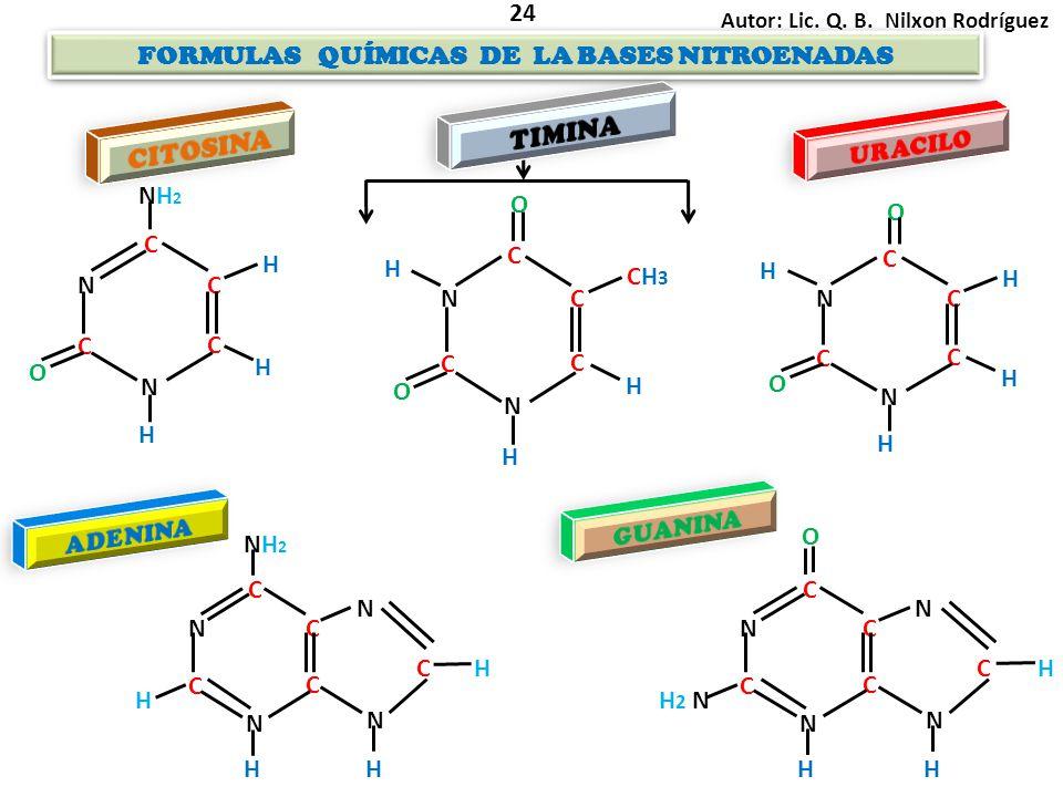FORMULAS QUÍMICAS DE LA BASES NITROENADAS FORMULAS QUÍMICAS DE LA BASES NITROENADAS Autor: Lic. Q. B. Nilxon Rodríguez 24 N C C C N C H H NH2NH2 O H N