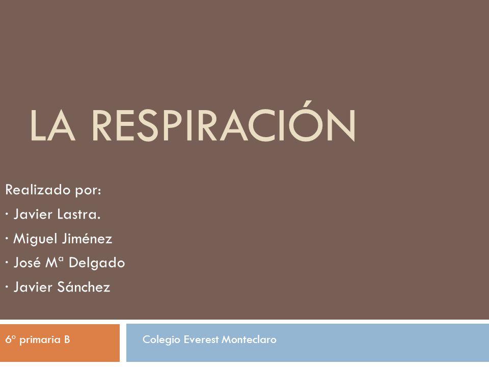 LA RESPIRACIÓN Realizado por: · Javier Lastra. · Miguel Jiménez · José Mª Delgado · Javier Sánchez 6º primaria BColegio Everest Monteclaro