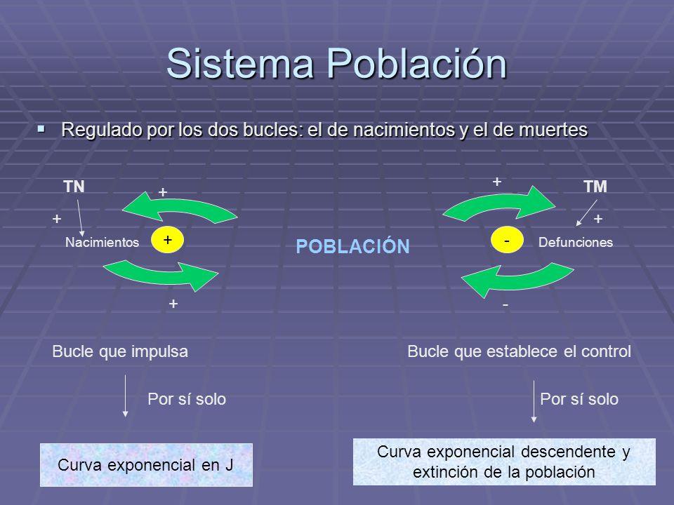 Sistema Población Regulado por los dos bucles: el de nacimientos y el de muertes Nacimientos Defunciones POBLACIÓN TNTM + + + + Bucle que impulsa Por