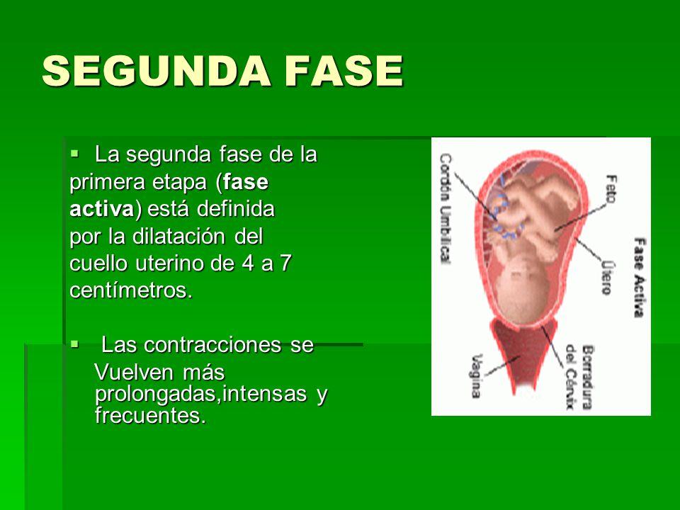SEGUNDA FASE La segunda fase de la La segunda fase de la primera etapa (fase activa) está definida por la dilatación del cuello uterino de 4 a 7 centí