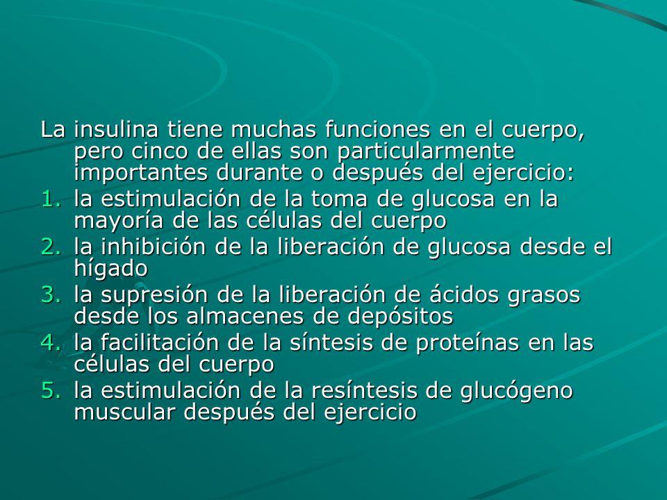 La insulina tiene muchas funciones en el cuerpo, pero cinco de ellas son particularmente importantes durante o después del ejercicio: 1.la estimulació