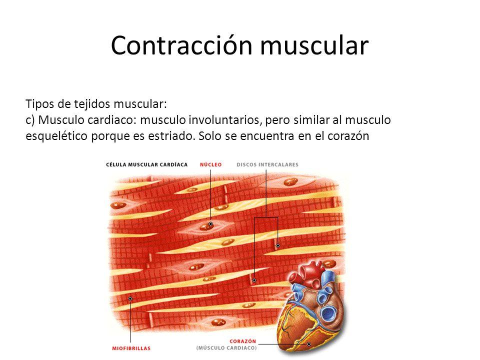 Contracción muscular Tipos de tejidos muscular: c) Musculo cardiaco: musculo involuntarios, pero similar al musculo esquelético porque es estriado.