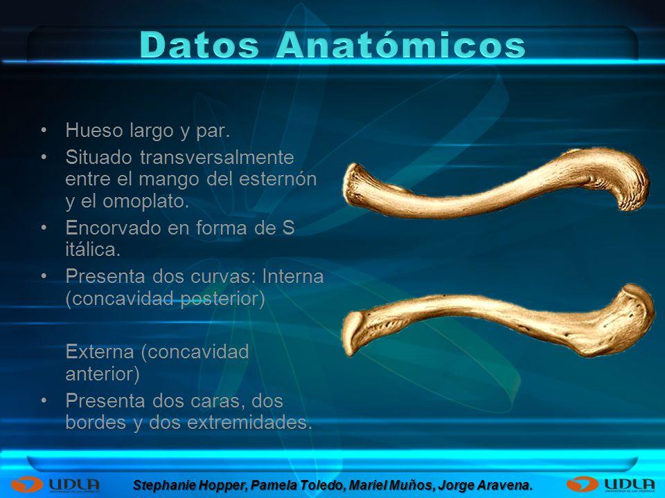 La posición anatómica de la clavícula y la situación superficial facilitan su fractura.