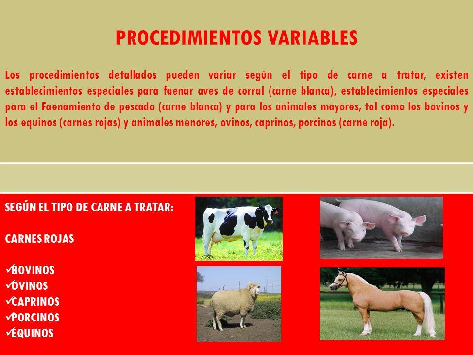 PROCEDIMIENTOS VARIABLES Los procedimientos detallados pueden variar según el tipo de carne a tratar, existen establecimientos especiales para faenar