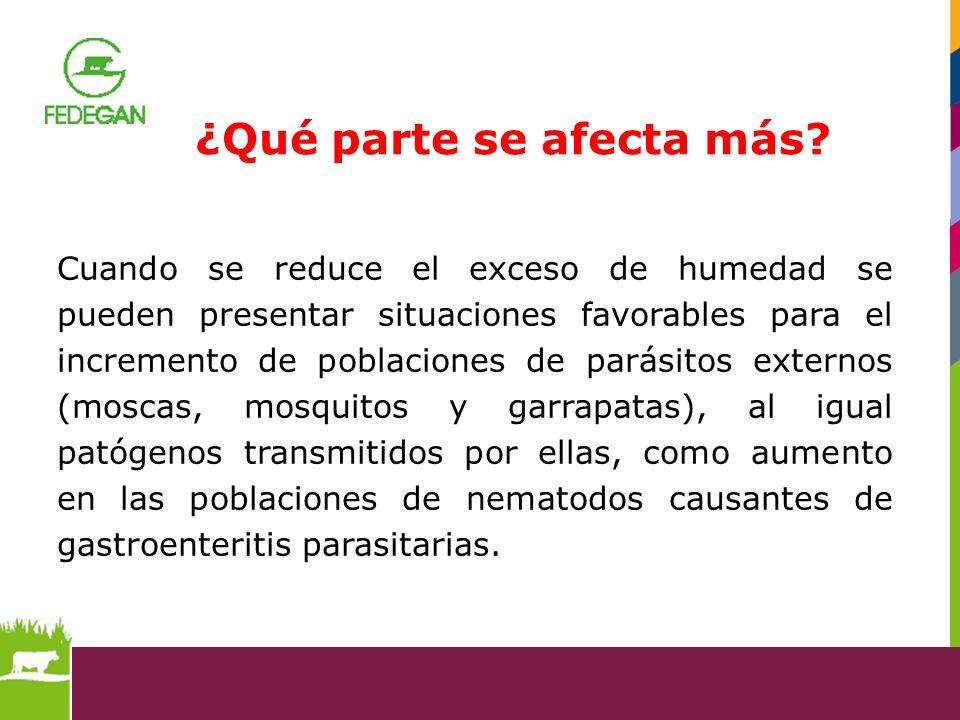Cuando se reduce el exceso de humedad se pueden presentar situaciones favorables para el incremento de poblaciones de parásitos externos (moscas, mosq