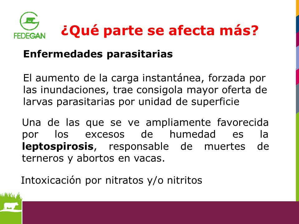 Intoxicación por nitratos y/o nitritos Una de las que se ve ampliamente favorecida por los excesos de humedad es la leptospirosis, responsable de muer