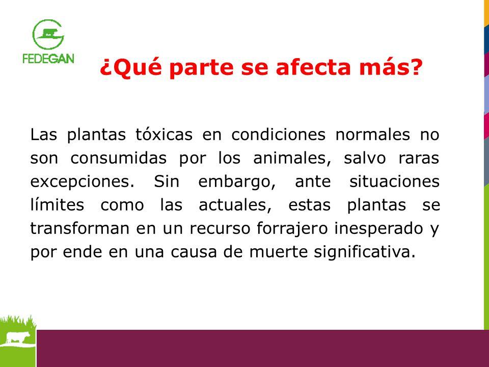 Las plantas tóxicas en condiciones normales no son consumidas por los animales, salvo raras excepciones. Sin embargo, ante situaciones límites como la