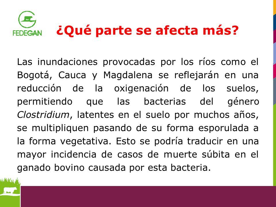 Las inundaciones provocadas por los ríos como el Bogotá, Cauca y Magdalena se reflejarán en una reducción de la oxigenación de los suelos, permitiendo