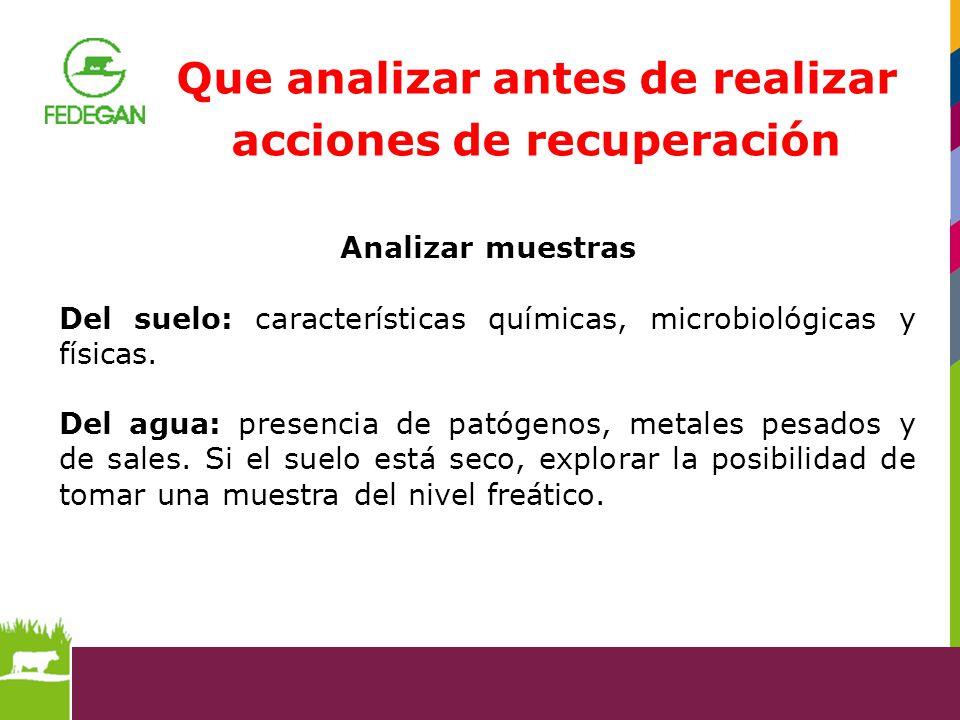 Que analizar antes de realizar acciones de recuperación Analizar muestras Del suelo: características químicas, microbiológicas y físicas. Del agua: pr