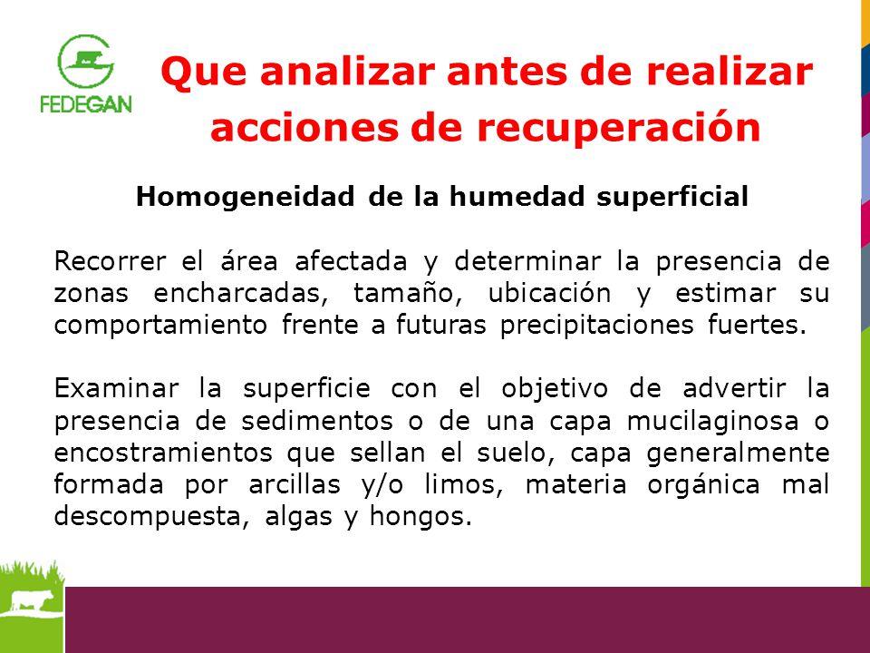 Que analizar antes de realizar acciones de recuperación Homogeneidad de la humedad superficial Recorrer el área afectada y determinar la presencia de