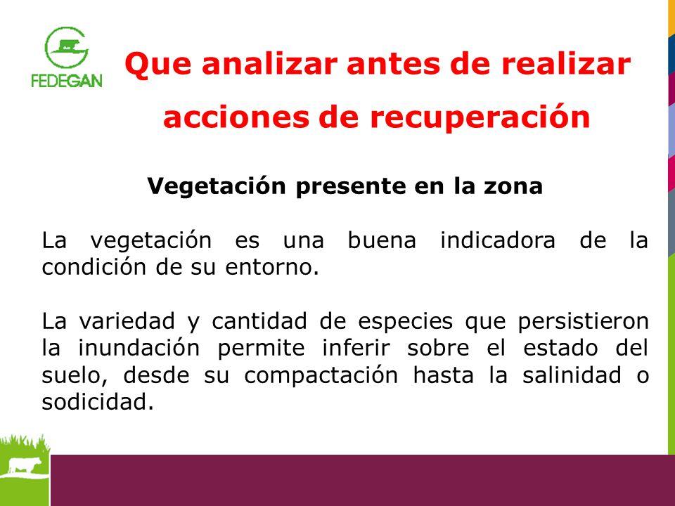 Vegetación presente en la zona La vegetación es una buena indicadora de la condición de su entorno. La variedad y cantidad de especies que persistiero