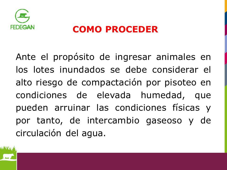 Ante el propósito de ingresar animales en los lotes inundados se debe considerar el alto riesgo de compactación por pisoteo en condiciones de elevada