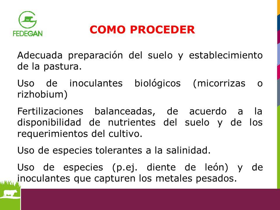 Adecuada preparación del suelo y establecimiento de la pastura. Uso de inoculantes biológicos (micorrizas o rizhobium) Fertilizaciones balanceadas, de