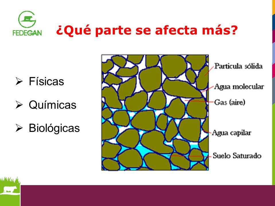 Físicas Químicas Biológicas ¿Qué parte se afecta más?