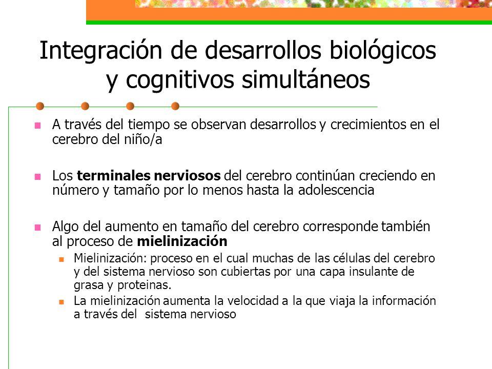 Integración de desarrollos biológicos y cognitivos simultáneos A través del tiempo se observan desarrollos y crecimientos en el cerebro del niño/a Los terminales nerviosos del cerebro continúan creciendo en número y tamaño por lo menos hasta la adolescencia Algo del aumento en tamaño del cerebro corresponde también al proceso de mielinización Mielinización: proceso en el cual muchas de las células del cerebro y del sistema nervioso son cubiertas por una capa insulante de grasa y proteinas.