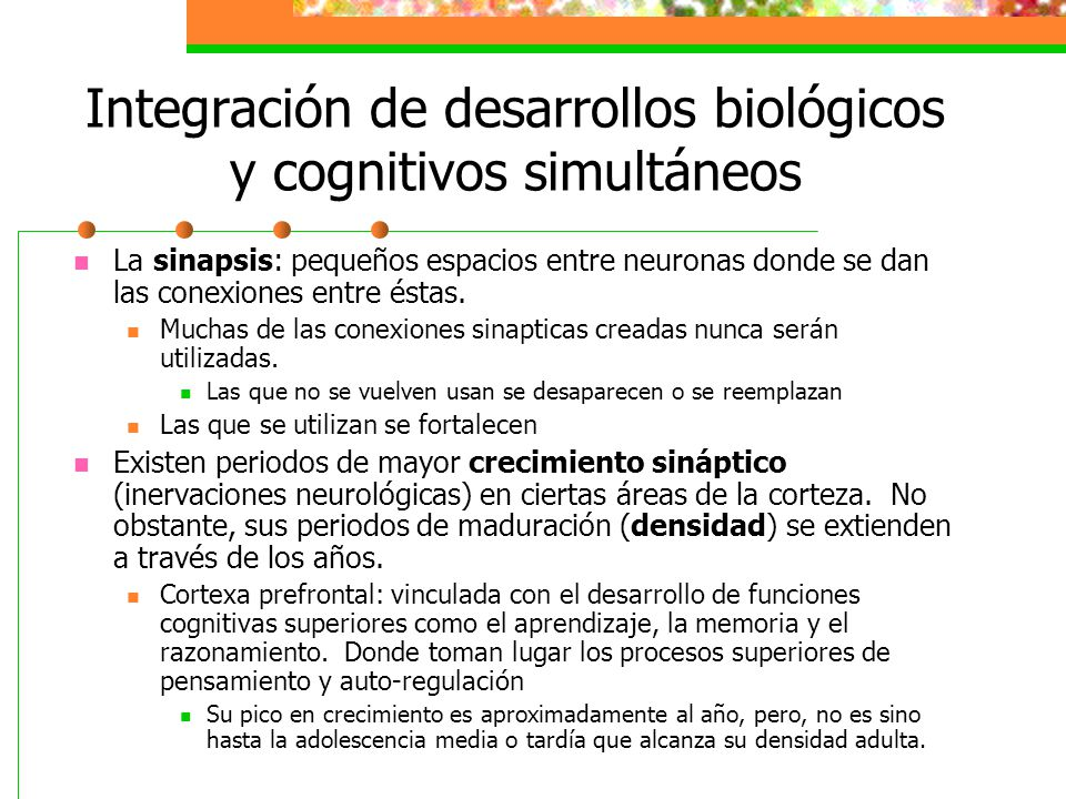 Integración de desarrollos biológicos y cognitivos simultáneos La sinapsis: pequeños espacios entre neuronas donde se dan las conexiones entre éstas.