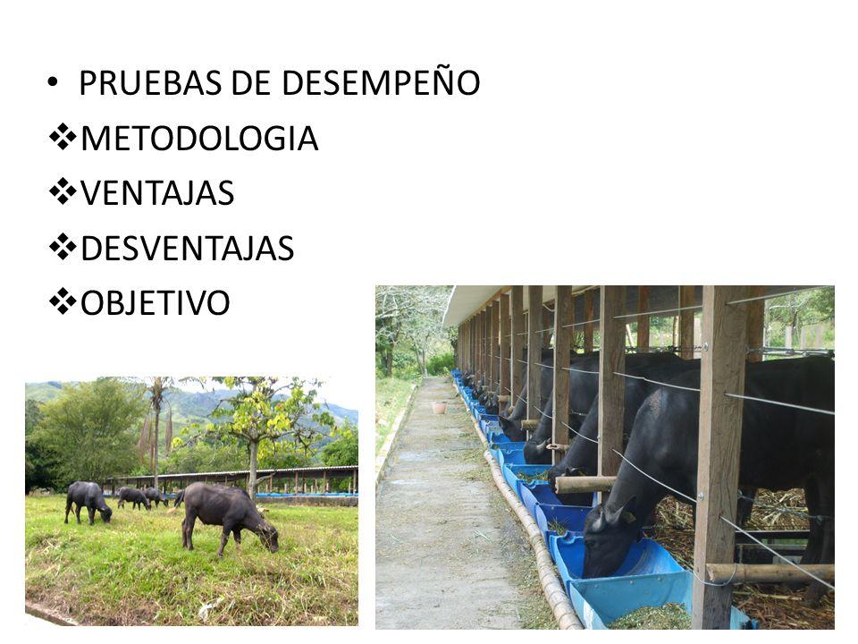PRUEBAS DE DESEMPEÑO METODOLOGIA VENTAJAS DESVENTAJAS OBJETIVO