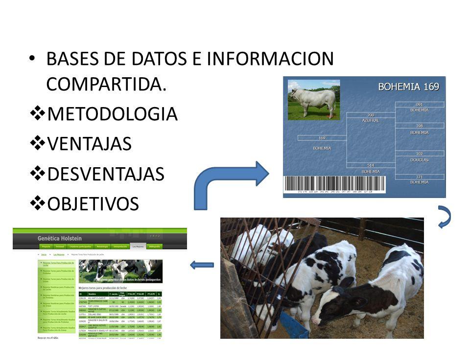 BASES DE DATOS E INFORMACION COMPARTIDA. METODOLOGIA VENTAJAS DESVENTAJAS OBJETIVOS