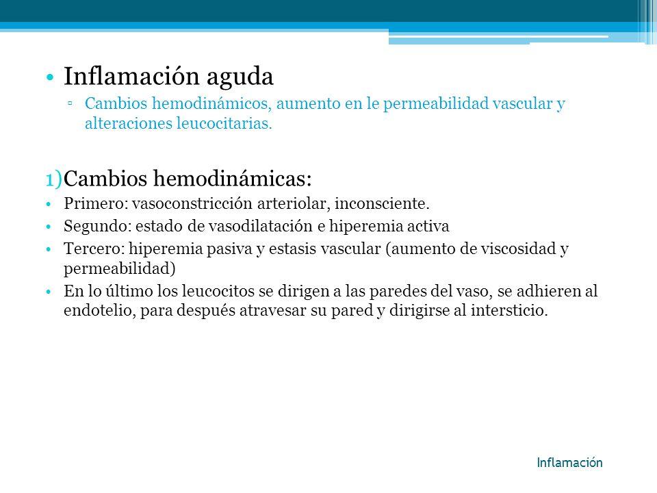 Inflamación aguda Cambios hemodinámicos, aumento en le permeabilidad vascular y alteraciones leucocitarias. 1)Cambios hemodinámicas: Primero: vasocons