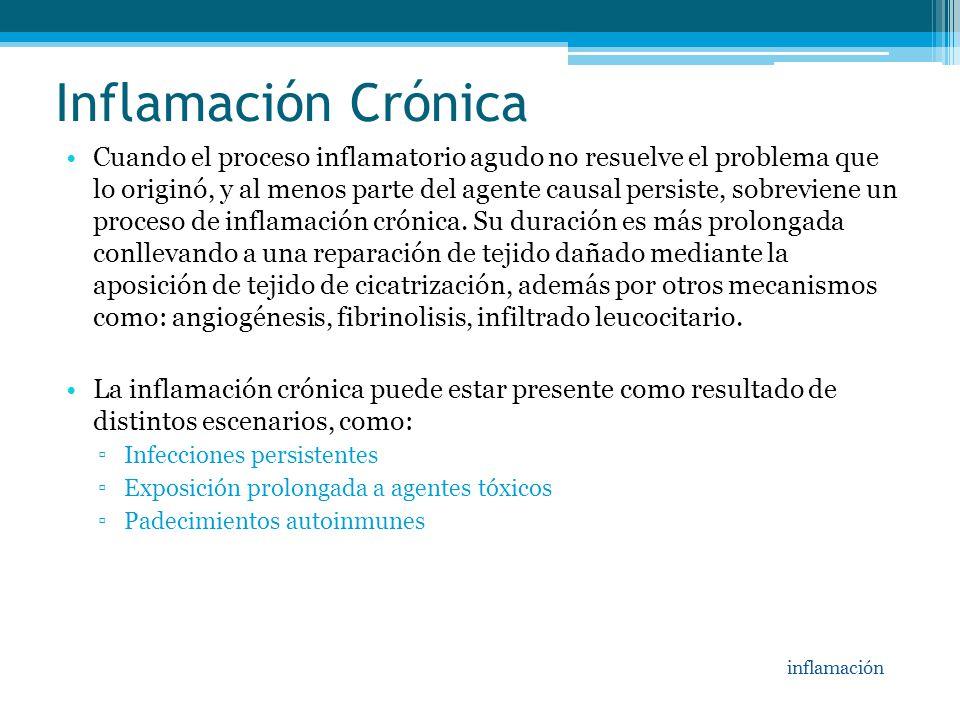 Inflamación Crónica Cuando el proceso inflamatorio agudo no resuelve el problema que lo originó, y al menos parte del agente causal persiste, sobrevie
