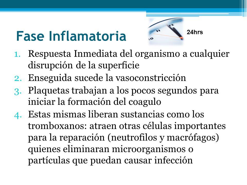 Fase Inflamatoria 1.Respuesta Inmediata del organismo a cualquier disrupción de la superficie 2.Enseguida sucede la vasoconstricción 3.Plaquetas traba