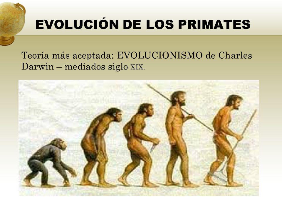 EDADES DE LA PREHISTORIA HUMANA PALEOLÍTICO (Piedra tallada) 2.500.000 a.a.