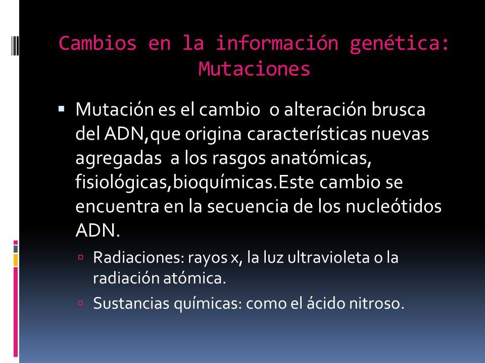 Cambios en la información genética: Mutaciones Mutación es el cambio o alteración brusca del ADN,que origina características nuevas agregadas a los rasgos anatómicas, fisiológicas,bioquímicas.Este cambio se encuentra en la secuencia de los nucleótidos ADN.
