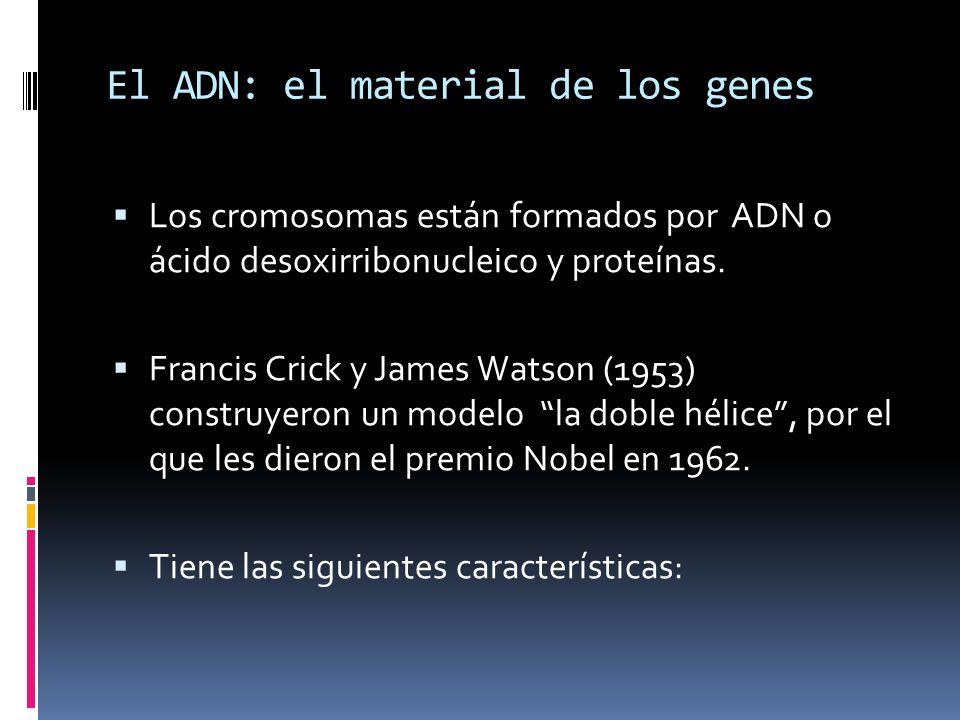 El ADN: el material de los genes Los cromosomas están formados por ADN o ácido desoxirribonucleico y proteínas.