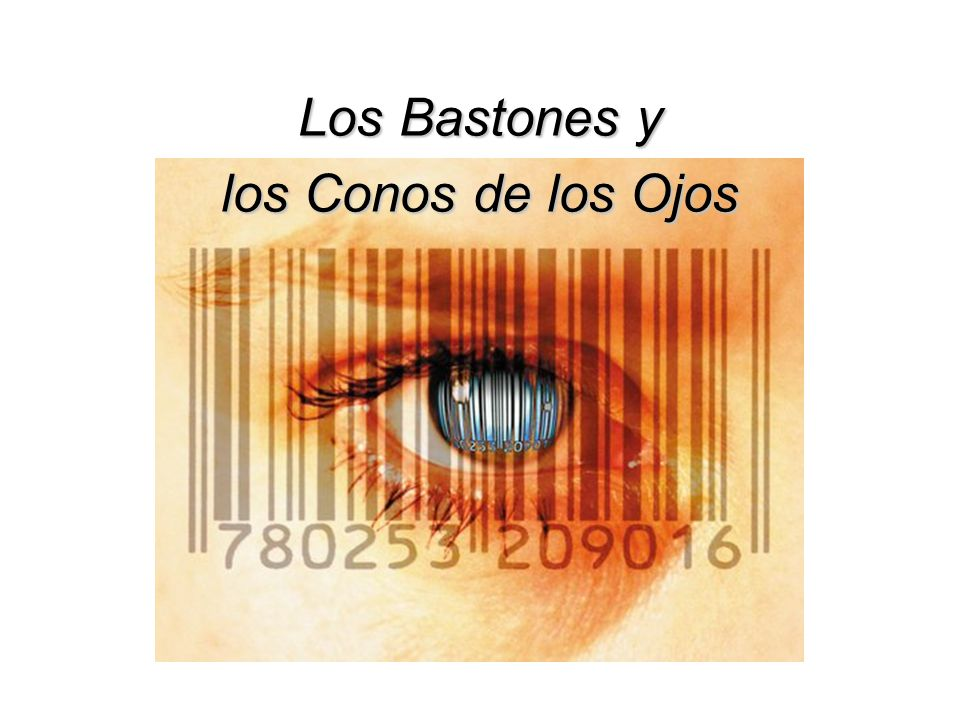 Los Bastones y los Conos de los Ojos