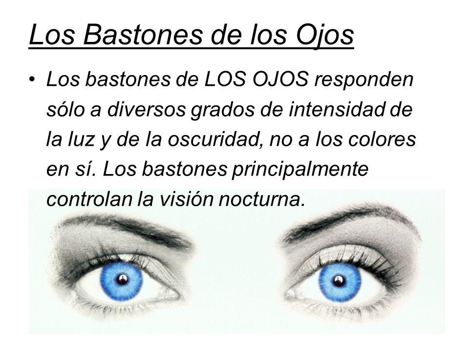 Los Bastones de los Ojos Los bastones de LOS OJOS responden sólo a diversos grados de intensidad de la luz y de la oscuridad, no a los colores en sí.