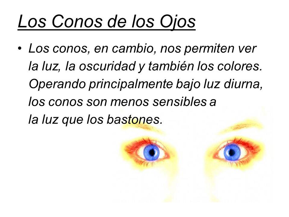 Los Conos de los Ojos Los conos, en cambio, nos permiten ver la luz, la oscuridad y también los colores. Operando principalmente bajo luz diurna, los