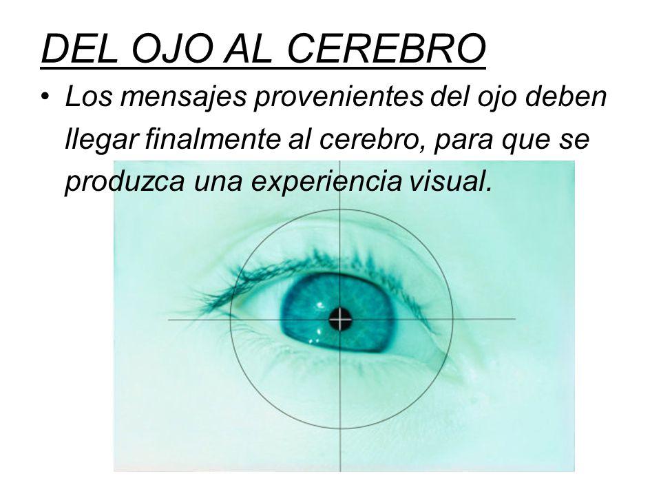 DEL OJO AL CEREBRO Los mensajes provenientes del ojo deben llegar finalmente al cerebro, para que se produzca una experiencia visual.