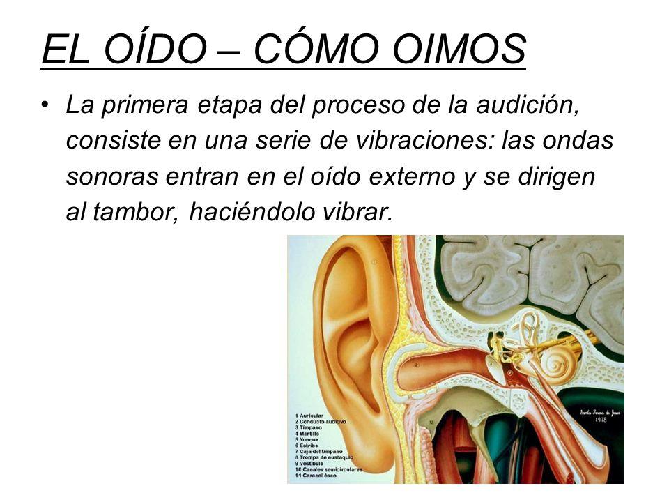 La primera etapa del proceso de la audición, consiste en una serie de vibraciones: las ondas sonoras entran en el oído externo y se dirigen al tambor, haciéndolo vibrar.