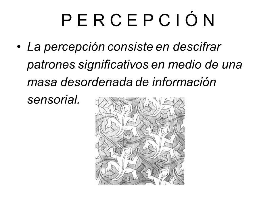 P E R C E P C I Ó N Los procesos perceptuales son la herramienta que usamos para entender e interpretar la infinidad de sensaciones que experimentamos continuamente; sin ellos hasta las actividades más sencillas se volverían imposibles.