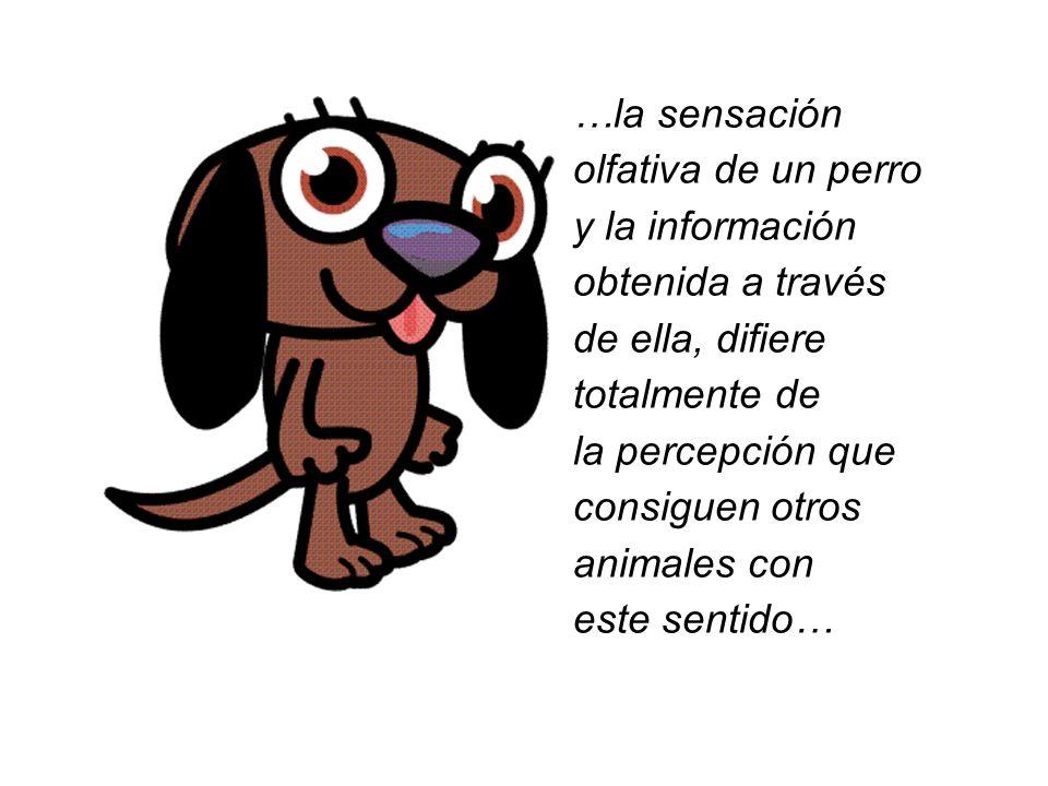 …la sensación olfativa de un perro y la información obtenida a través de ella, difiere totalmente de la percepción que consiguen otros animales con es