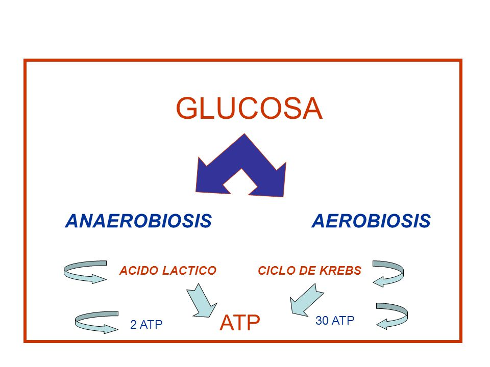 GLUCOSA ANAEROBIOSIS AEROBIOSIS ATP ACIDO LACTICO CICLO DE KREBS 2 ATP 30 ATP