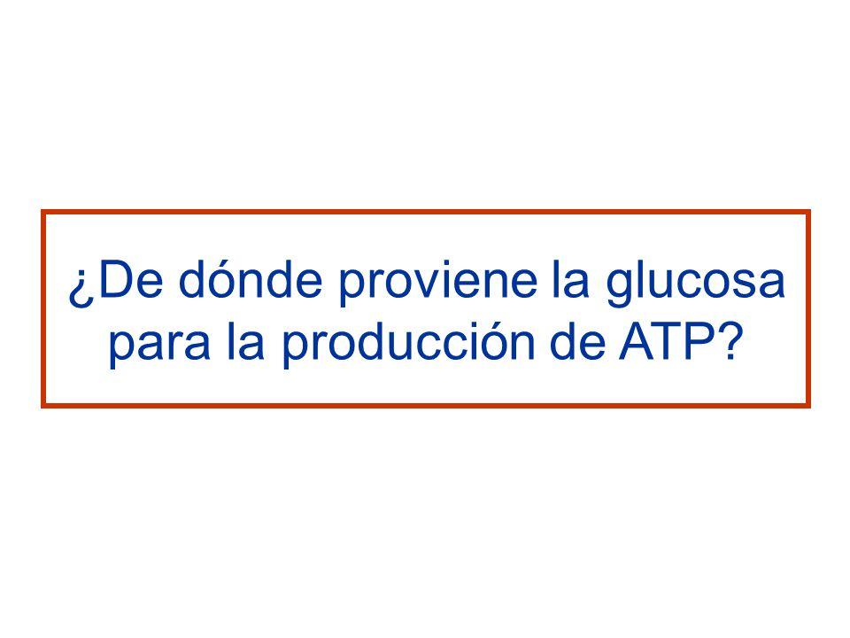¿De dónde proviene la glucosa para la producción de ATP?
