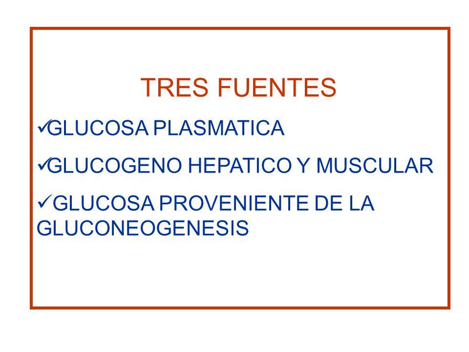 TRES FUENTES GLUCOSA PLASMATICA GLUCOGENO HEPATICO Y MUSCULAR GLUCOSA PROVENIENTE DE LA GLUCONEOGENESIS