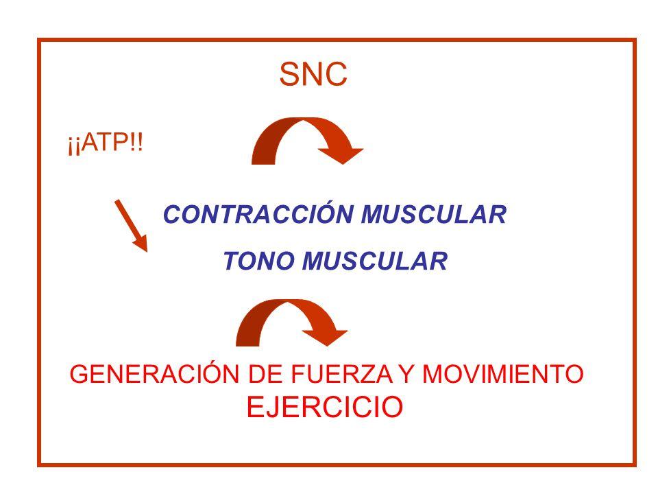 CONTRACCIÓN MUSCULAR TONO MUSCULAR SNC GENERACIÓN DE FUERZA Y MOVIMIENTO EJERCICIO ¡¡ATP!!