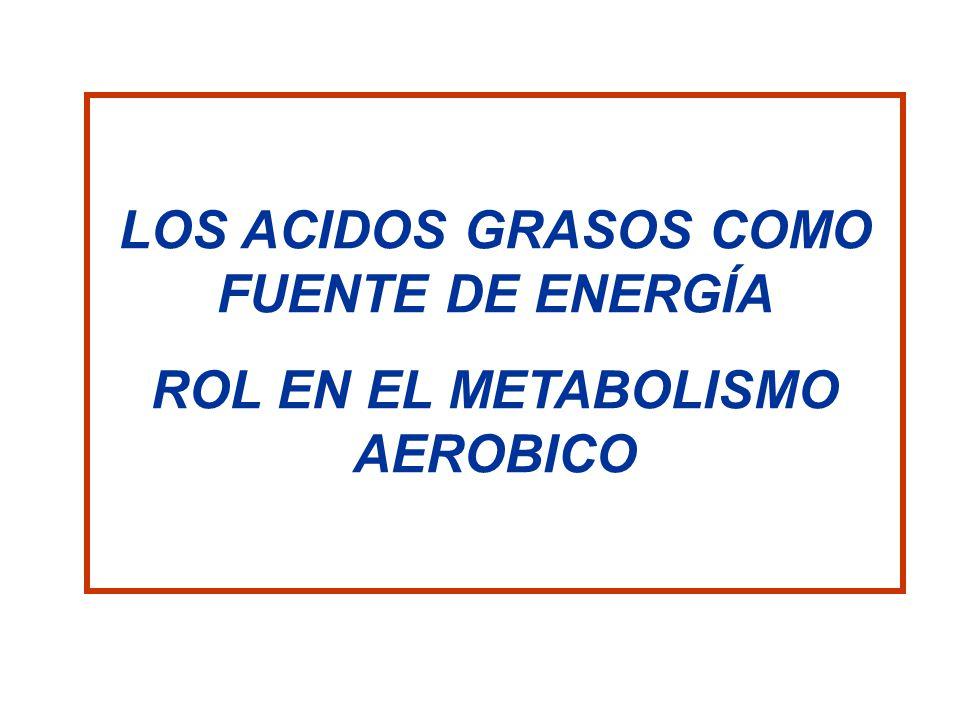LOS ACIDOS GRASOS COMO FUENTE DE ENERGÍA ROL EN EL METABOLISMO AEROBICO