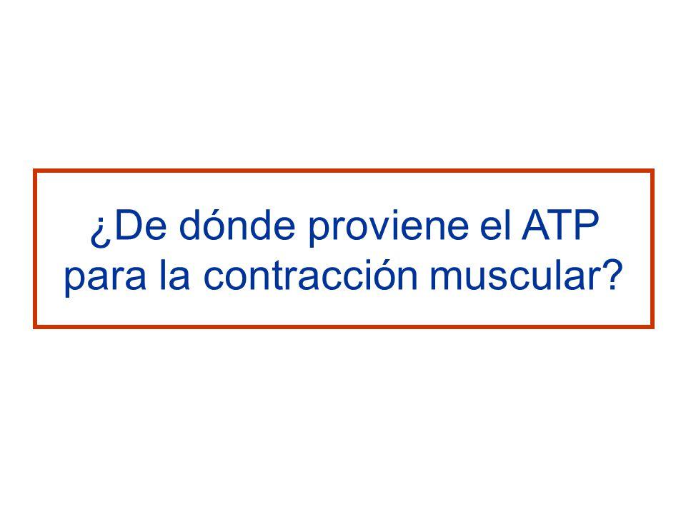 ¿De dónde proviene el ATP para la contracción muscular?