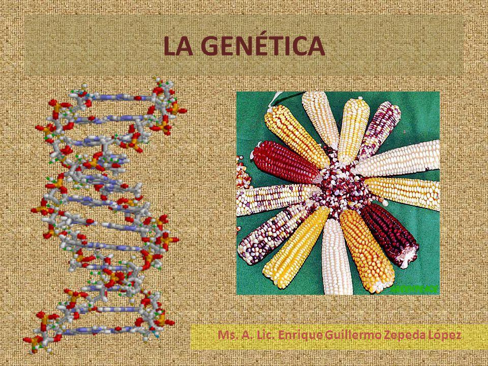 LA GENÉTICA Ms. A. Lic. Enrique Guillermo Zepeda López