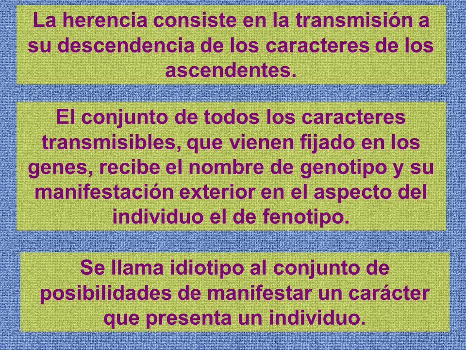 La herencia consiste en la transmisión a su descendencia de los caracteres de los ascendentes.