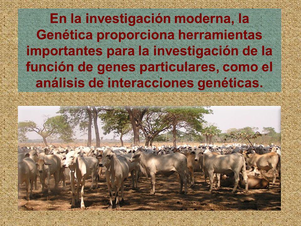 En la investigación moderna, la Genética proporciona herramientas importantes para la investigación de la función de genes particulares, como el análisis de interacciones genéticas.