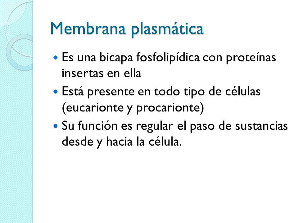 Membrana plasmática Es una bicapa fosfolipídica con proteínas insertas en ella Está presente en todo tipo de células (eucarionte y procarionte) Su función es regular el paso de sustancias desde y hacia la célula.