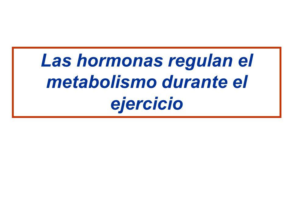 Las hormonas regulan el metabolismo durante el ejercicio