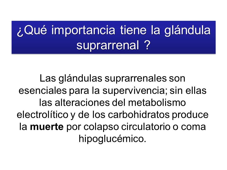 Las glándulas suprarrenales son esenciales para la supervivencia; sin ellas las alteraciones del metabolismo electrolítico y de los carbohidratos prod