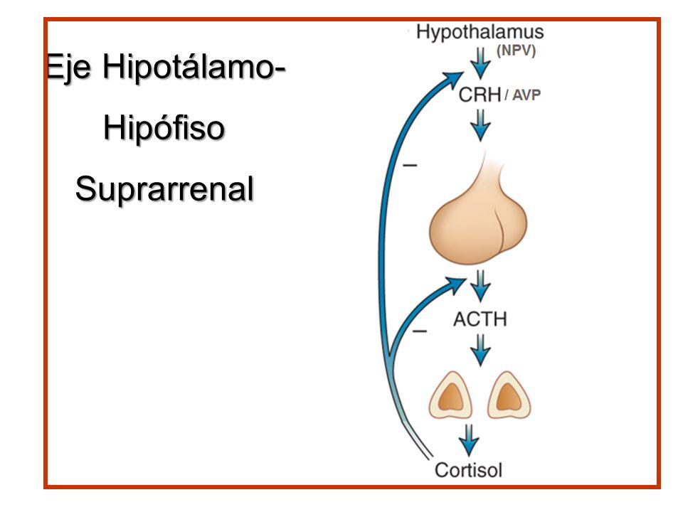 Eje Hipotálamo- HipófisoSuprarrenal