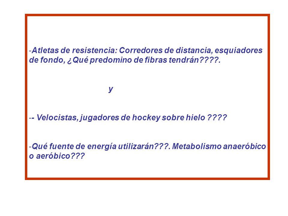 -Atletas de resistencia: Corredores de distancia, esquiadores de fondo, ¿Qué predomino de fibras tendrán????. y -- Velocistas, jugadores de hockey sob