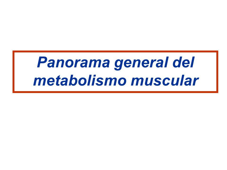 Panorama general del metabolismo muscular
